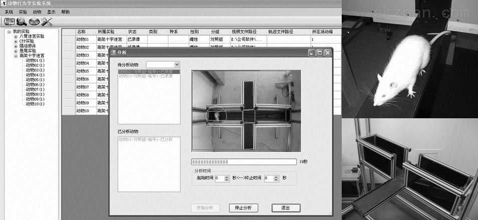 高架十字迷宫视频分析系统